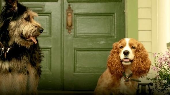 Lilli e il vagabondo live action la prima immagine del film in