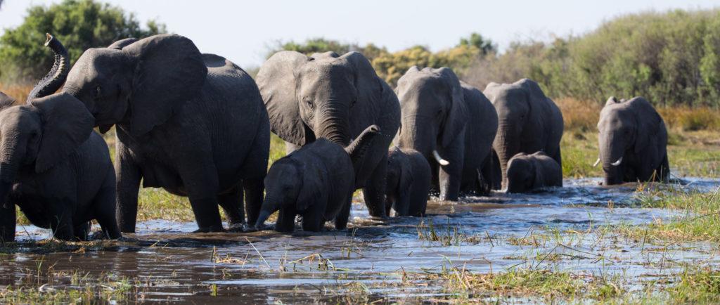 La Famiglia di Elefanti e Echo, Il Delfino, due nuovi documentari ...